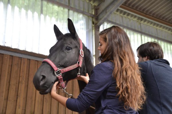 ESSE chevaux Cécile Thore